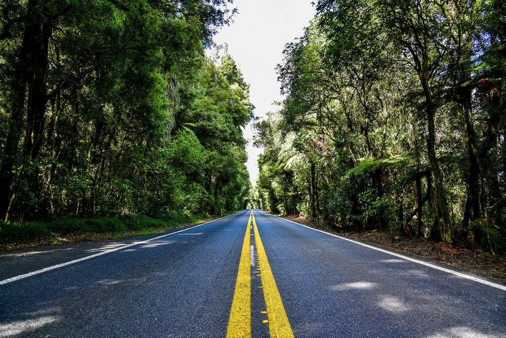 Nouvelle-Zélande - Rotorua Road