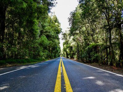 #03 Nouvelle-Zélande – Rotorua Road