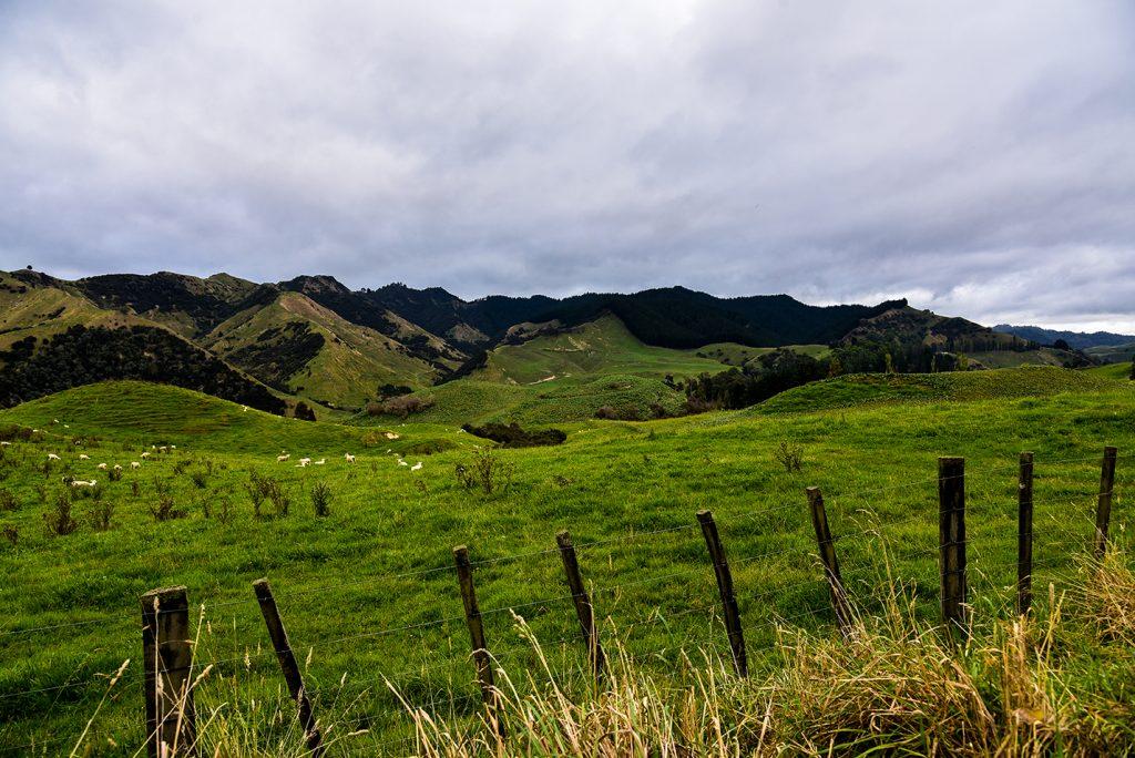 Nouvelle-Zélande - Silence