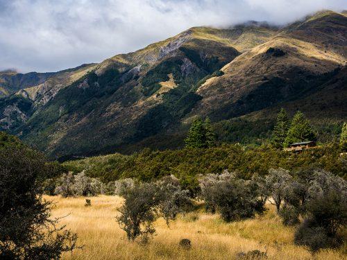 #45 Nouvelle-Zélande – Castle Hill