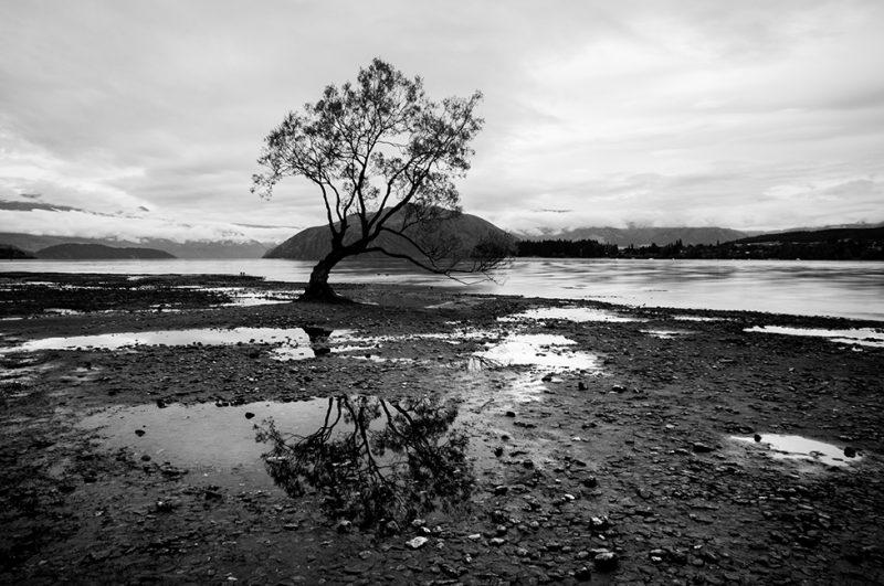 Nouvelle-Zélande - Wanaka Tree
